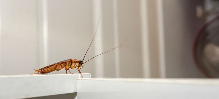 Crawling cockroach on a countertop