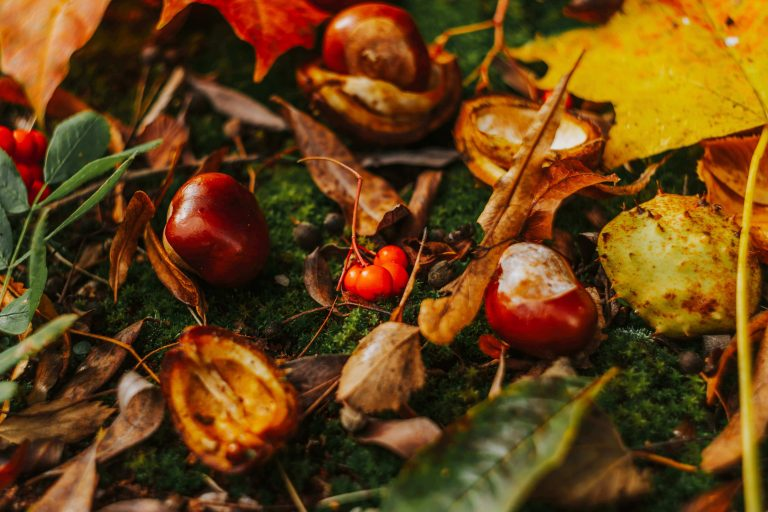 Spiders and Conkers Myth: Do Conkers Keep Spiders Away?