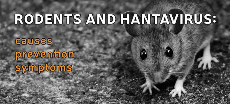 Rodents and Hantavirus: Causes, Prevention, and Symptoms