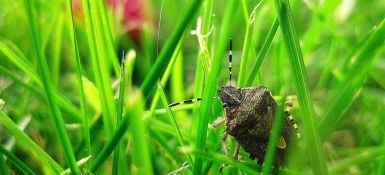Protect Your Home against Stink Bugs
