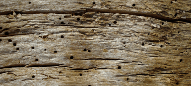 Treating Woodworm in Furniture