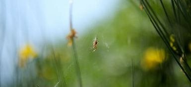 How are Spiders Beneficial in Pest Control? What Do Spiders Eat?