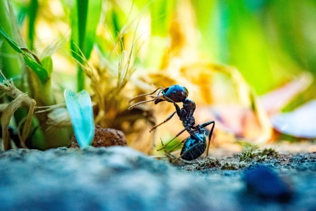 Queen Ants: What You Want to Know