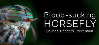 Get Rid of Horseflies