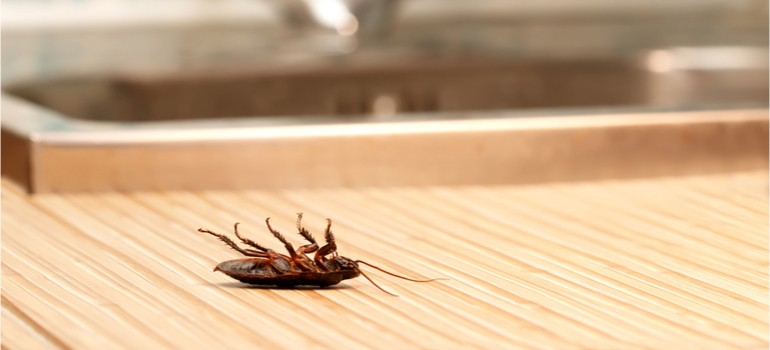 What are The Most Common Pests in Restaurant Kitchens?