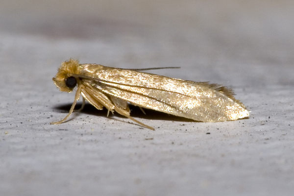 Clothes Moths Facts | How to Get Rid of Moths