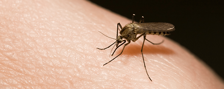 Mosquito bites human