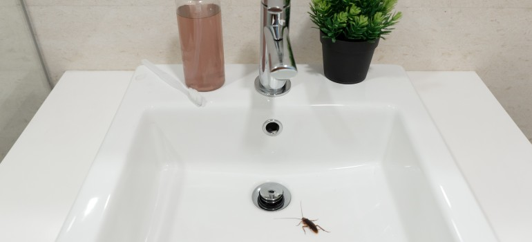 cockroaches in the bathroom or kitchen sink