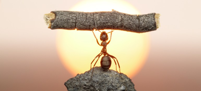 strong ant Fantastic Pest Control